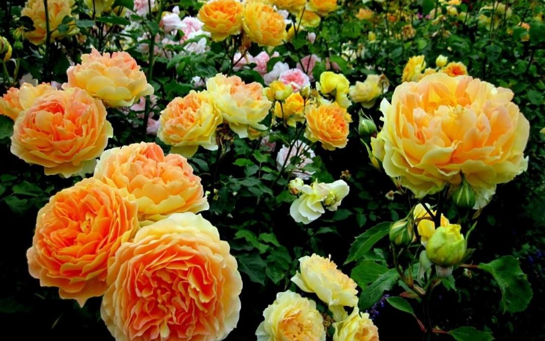 Summer Fun 2015 Monet's Garden